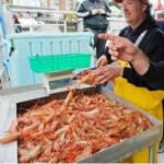 斑点明虾节