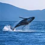 加拿大赏鲸之旅