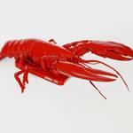 iPhone龙虾壳