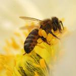 神奇办公室蜂蜜减肥法