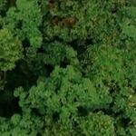 看《爸爸2》萌娃丛林大冒险 探索萃森原森