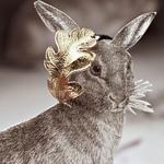初雪后的森林饰界 动物带来暖心珠宝